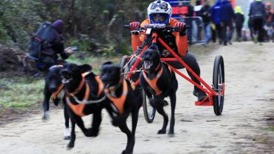 Photo of Máis de 300 deportistas participarán no Campionato de España de Mushing Terra 2019, en Boborás