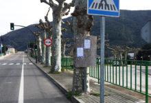 Photo of As árbores que medran na beirarrúa lindante co campo de San Roque, na Rúa, crean polémica