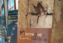 """Photo of Descubrindo os """"Morcegos de Galicia"""" en Verín"""