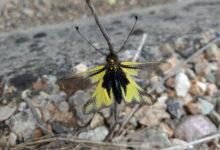 Photo of Identificando bolboretas dende casa