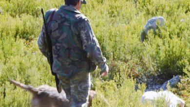 Photo of Medio Ambiente dá luz verde á mobilidade dos cazadores, federados e non federados, para a caza de xabarín e lobo