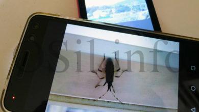 """Photo of """"Clic Xanela"""", un curso en liña para mellorar as fotografías feitas co móbil"""