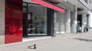 Photo of Os patos fan amigos polas rúas e prazas do Barco