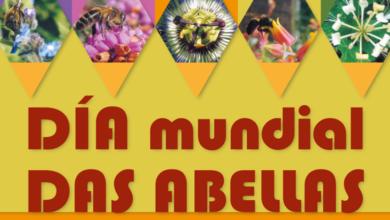 Photo of AGA celebrará  Día Mundial das Abellas cun concurso infantil e cun curso de apicultura