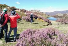 Photo of Unha aperta a Trevinca para celebrar o 13 de xuño o Día da Montaña Galega