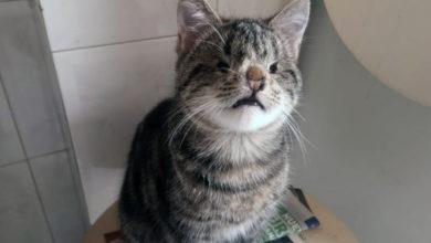 Photo of A nova vida de Ramón, un gato moi especial