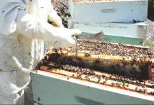 Photo of Sae publicada no DOG a orde de axudas á apicultura