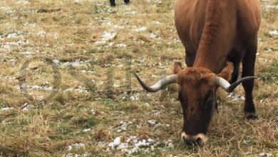 Photo of Amplíase ata o 15 de xuño o prazo para que agricultores e gandeiros soliciten axudas da PAC