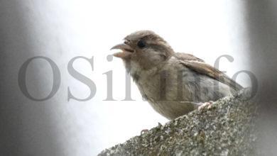 Photo of As altas temperaturas de Valdeorras tamén fan mella nas aves