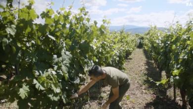 Photo of O Concello da Rúa difunde o vídeo da campaña para promover o consumo de viño en Valdeorras