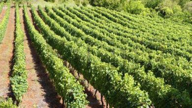 Photo of Curso de cata da Ruta do Viño Valdeorras o 26 de setembro