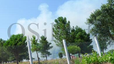 Photo of Incendio forestal en Vilanova (O Barco)