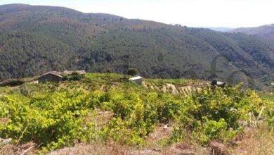 Photo of O viño trivés Alcouce 2014, ouro no Mondial des Vins Extremes en Aosta