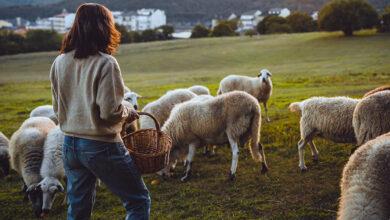 Photo of O CIM de Viana organiza actividades para conmemorar o Día da Muller Rural o 15 de outubro