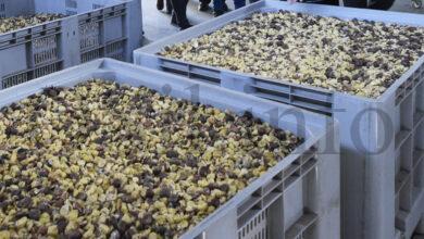 Photo of A Cooperativa Amarelante, de Manzaneda, nun proxecto para desenvolver novos produtos derivados da castaña
