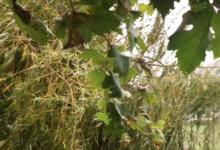Photo of Mantense o aviso amarelo por chuvia e vento na montaña ourensá