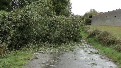 Photo of A borrasca provoca caídas de árbores e cortes nalgunhas estradas de Río