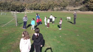 Photo of O CEIP do Bolo celebra o magosto visitando unha nave de castañas e unha granxa-escola