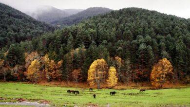 Photo of Vilariño de Conso pide un acceso dende o municipio ao Parque Natural do Invernadeiro
