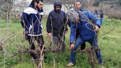 Photo of O curso de técnicas de cultivo en viticultura e plantación do viñedo da Uned A Rúa, emitirase online