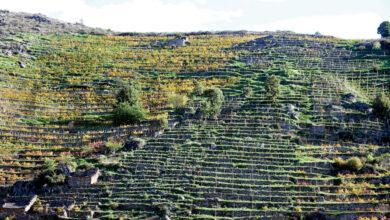 Photo of Licítase a sinalización das Rutas do Viño de Valdeorras, Ribeira Sacra e Monterrei